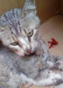 Küçükçekmece'de Kediye Tekmeli Saldırı